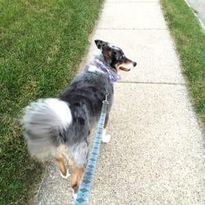 Wrango walking