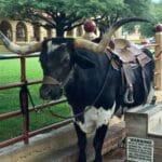 48 Hours in Texas